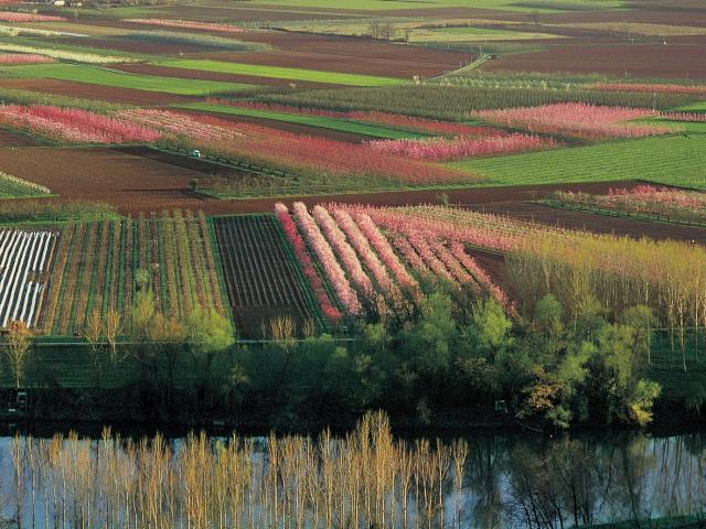 Vergers en fleur de la plaine du Tarn