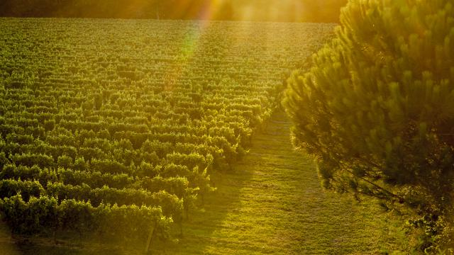 ©pierre Soissons Vignoble De Fronton
