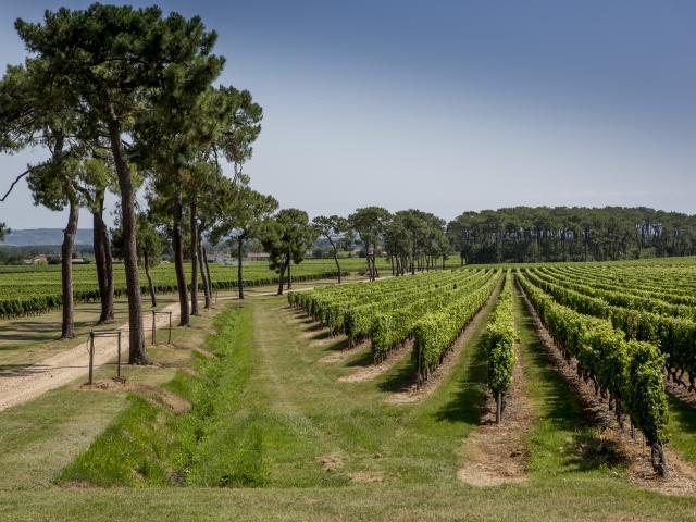 Vignoble Fronton Crédit Photo Pierre Soissons