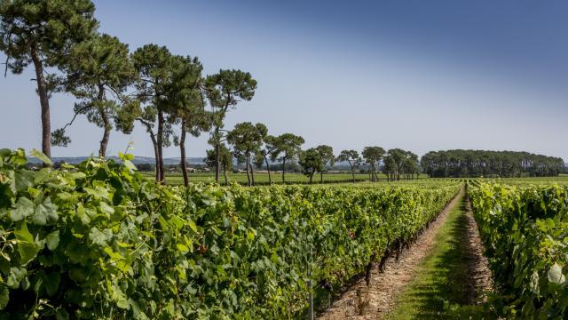 Vignoble De Fronton Campsas