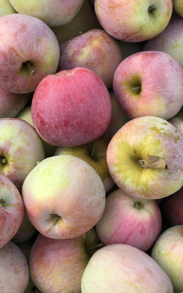 Pommes Ariane Adt 82