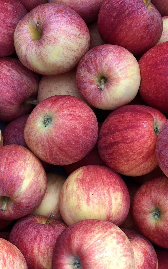 Pommes Gala Adt 82