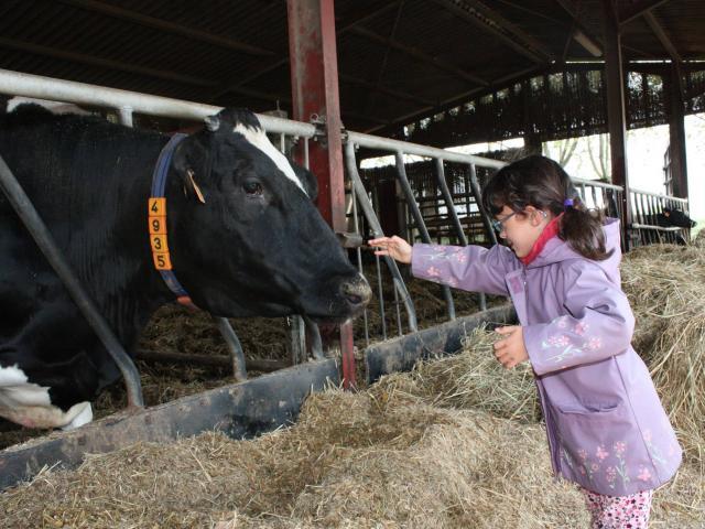 Enfant Et Vaches Ferme Du Ramier
